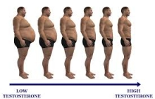 Some Causes of Low Testosterone