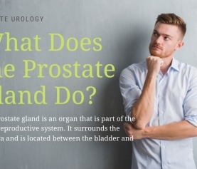 What Does the Prostate Gland Do?