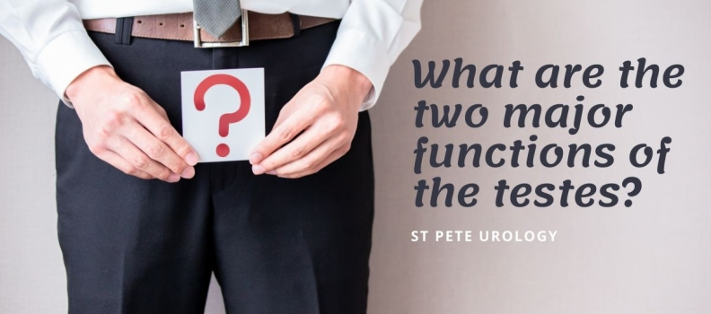 What are the two major functions of the testes?