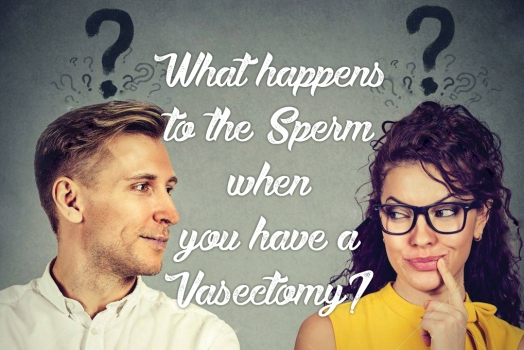 What happens to the sperm when you have a vasectomy?